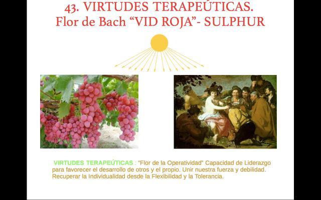 Libro de Toth 43