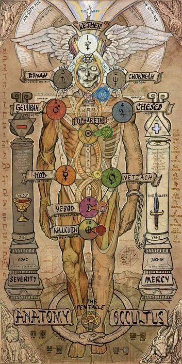11. anatomia oculta